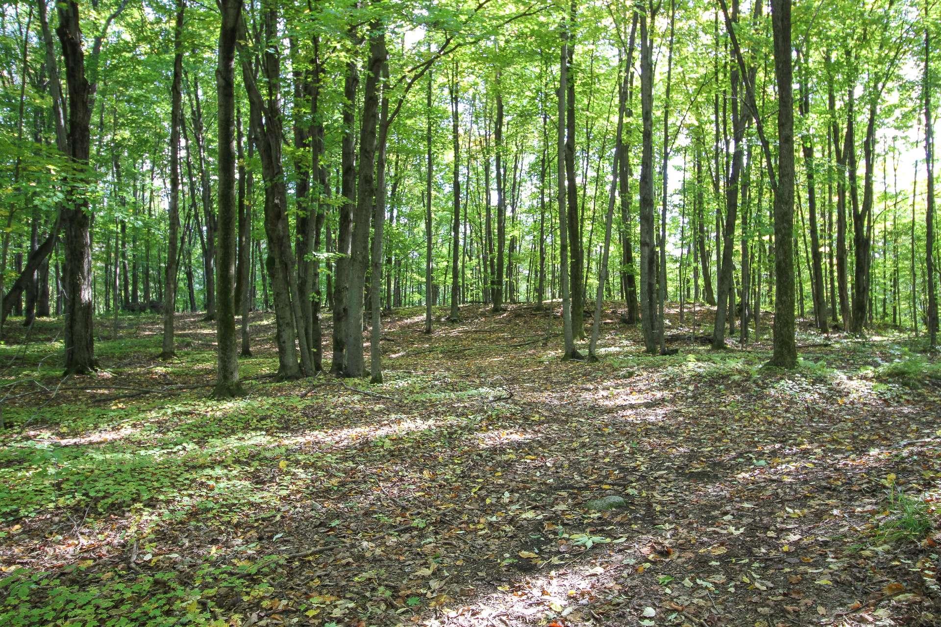 Maple grove