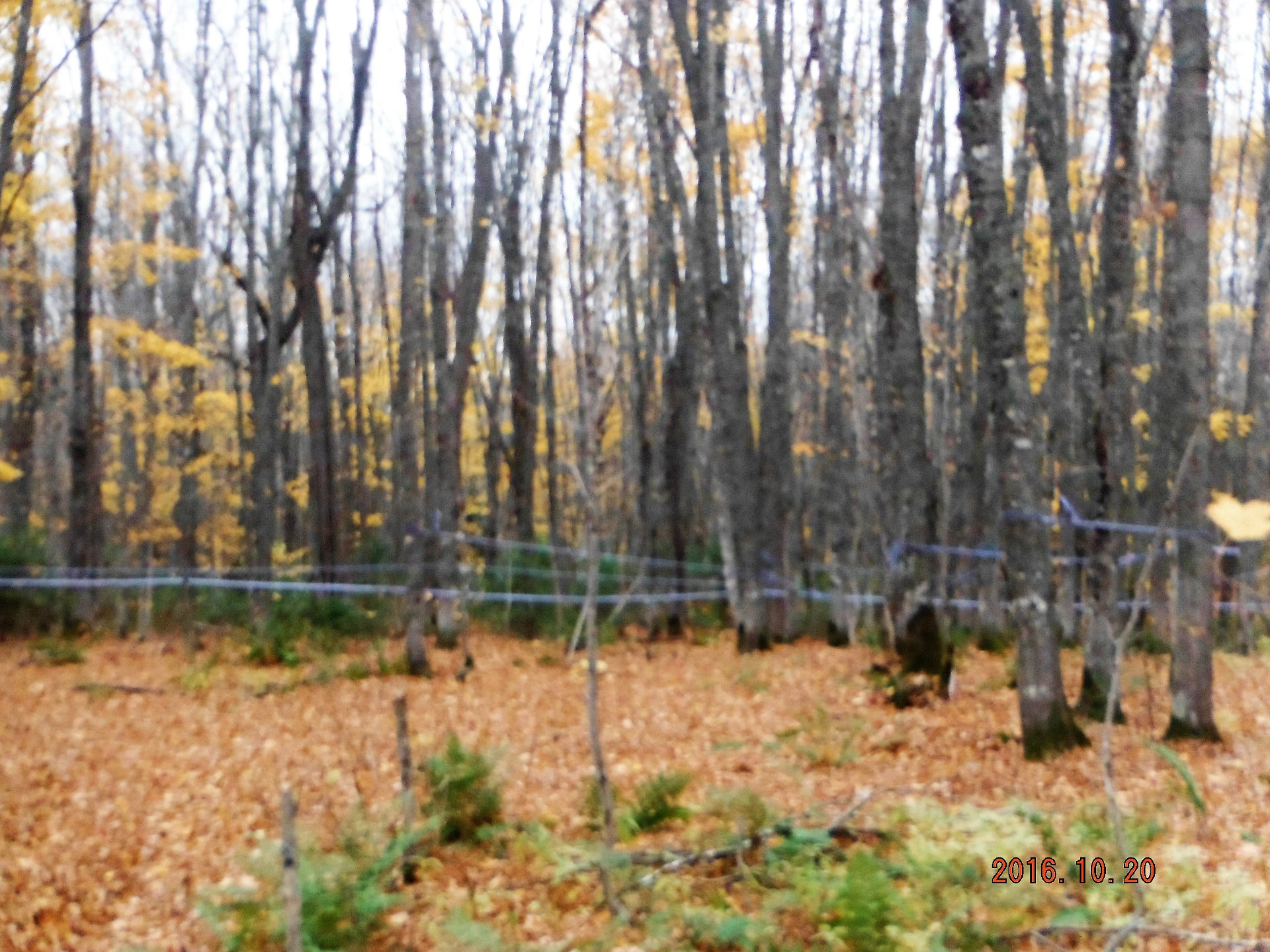 Terre à bois